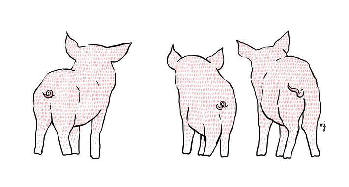 Three little pigs backs
