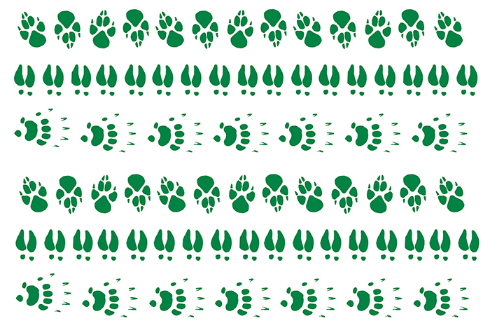 Whose is this paw endpaper
